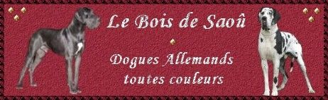 banner of the great danes breedingdu Bois de Saoû